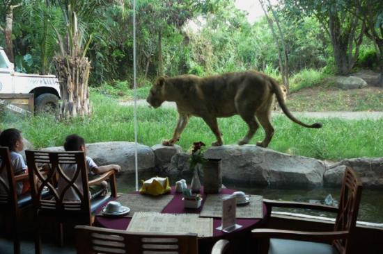 bali-safari-marine-park lion