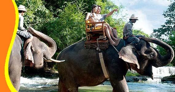 elephant bali zoo