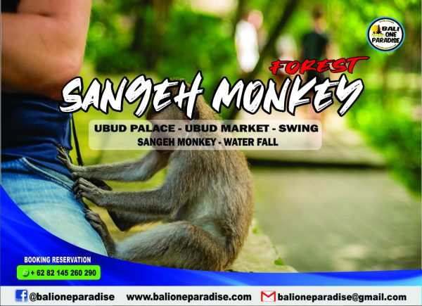SANGEH MONKEY